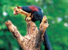 Peechi-Vazhani Wildlife Sanctuary