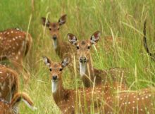 Ushakothi Wildlife Sanctuary